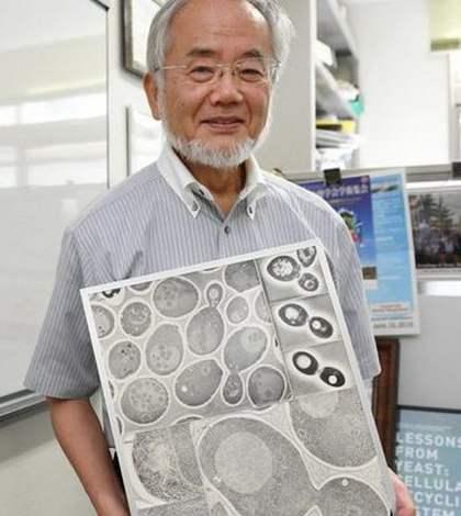 Японский учёный, молекулярный биолог Ёсинори Осуми