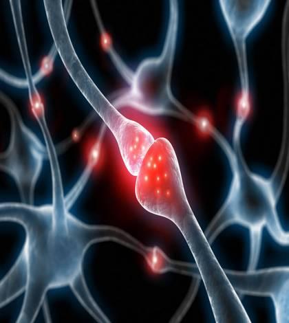 Так выглядит синапс