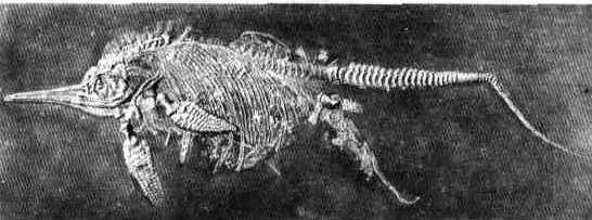 Самка ихтиозавра
