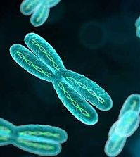 X-хромосома