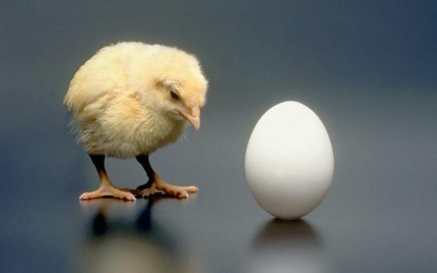 Предок современных куриц появился позже яйца